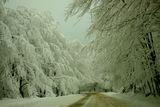 Снежно пътуване ; comments:5