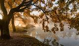 Про Осень , Свет и Туман ; comments:60