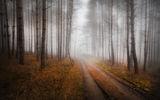 Път в мъглата ; comments:7