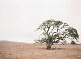 Калифорния на филм ; Comments:5