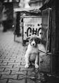 Портрет на кученце ; comments:28