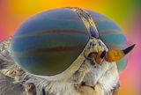 Конска муха ; comments:9