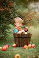 Бране на ябълки ; Comments:10