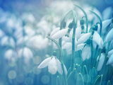 Пролет ; comments:35
