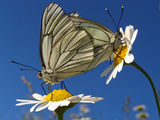 В царството на пеперудите ; comments:9