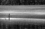 Рибарят, който ходеше... ; comments:29