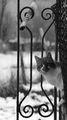 А дали котката донесе вестника ; comments:6