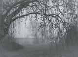 В часа на синята мъгла ; comments:21