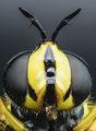 Някава мушица ; Comments:2