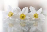 Усещане за пролет ; comments:9