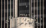 корона от птици ; Comments:7