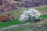 Пролетта се пробужда ; Comments:8