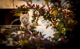 Те, мачка. ; comments:1
