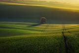 Утро в Южна Моравия ; comments:38