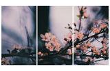 春の俳句 (Пролетно хайку) ; comments:20
