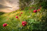 Дивата природа на България ; comments:33