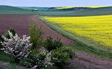Пролет в Дунавска Добруджа ; comments:23