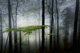 Приказната гора.... ; comments:16