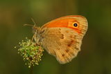 Пеперудено ; comments:6