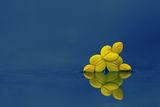Сигнално Жълто ; comments:8