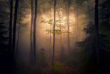 Витошко мъгливо.... ; comments:16