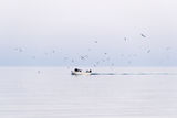 Вечерен риболов ; comments:4