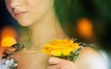Жълта роза... ; comments:13