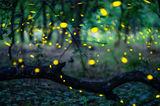 Светулките ; comments:9