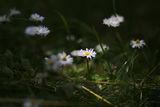 Пролетно ! ; comments:19
