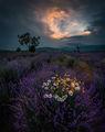 Цветове и аромати по здрач обсебват душата ми... ; comments:42