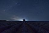 Тихи лавандулови нощи... ; comments:19