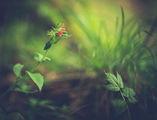 Когато природата и обективът започнат да рисуват заедно ; comments:28