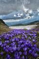 Красота от Рила планина ; comments:7