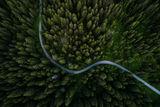 Зеленият път ; comments:10