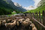 Овци :) ; comments:13