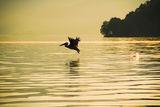Пеликанът ; comments:6