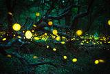 Светещата гора... ; comments:10
