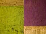 Земеделски килим... ; comments:11