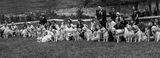 Български  голдън ретривър клуб 9.06.2018 Белокамъне ; Comments:15