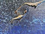 Подводен свят II ; comments:12