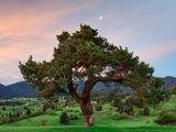 Дървото на живота ; Comments:2