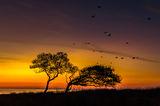 Изправи се, всяко утро носи надежда! ; comments:44