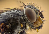 Домашна муха ; Comments:10