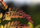 Красотата на цветните листа. ; comments:2