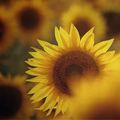 Остави ме да сънувам слънцето... ; comments:18
