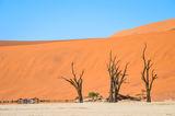 Deadvlei, Namib Desert ; comments:4