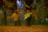 есен ; Comments:13