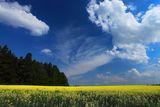 Жълто и синьо ...  &   B+W  TOP-POL ; comments:8