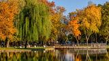 Есенните дрехи на дърветата ; comments:7