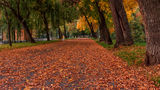 Есенно настроение ; comments:4